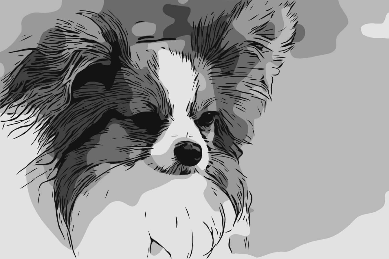 Hund Portrait Tierzeichnung