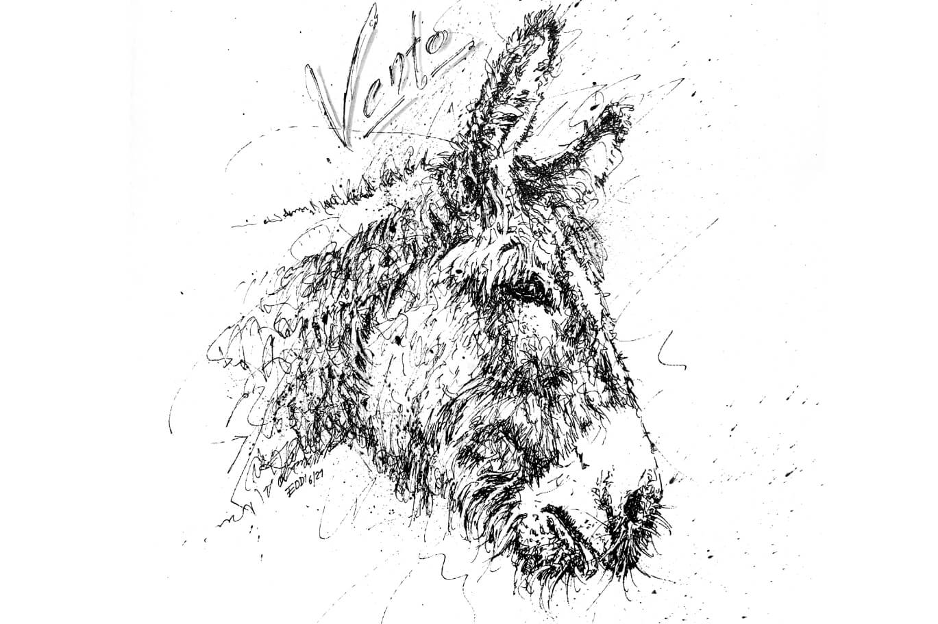 Esel Portrait Tierzeichnung